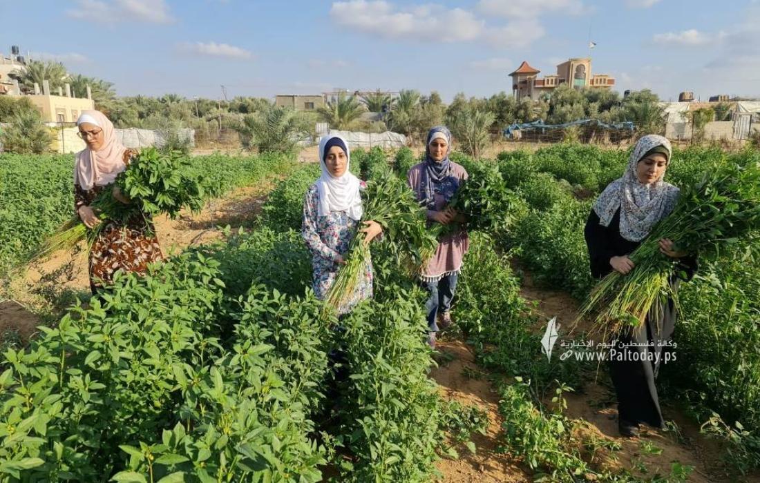 فتيات من غزة يُقمن مشروع زراعي تحدياً للبطالة (3).jpeg