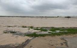 الزراعة: غرق مئات الدونمات الزراعية شرق الشجاعية وسط خسائر مادية كبيرة