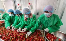 سيدات من غزة يتحدينّ الواقع الصعب بالعمل في تجميد الفواكه