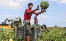 زراعة غزة تتحدث عن توفير اللحوم في رمضان المقبل.. وماذا عن موسم البطيخ!