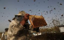 جني العسل صورة ارشيفية