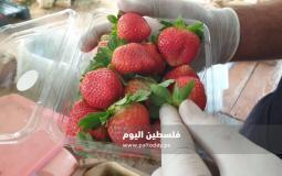 فراولة غزة2