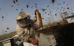 جولة لفلسطين اليوم لجني العسل
