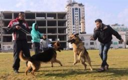 مواطنون يصطحبون كلابهم في مدينة غزة (ارشيف)