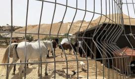قوات الاحتلال تهدم اسطبلا للخيول في بلدة الطور بالقدس المحتلة