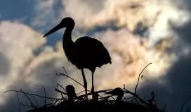 طائر باللون الأسود.JPG